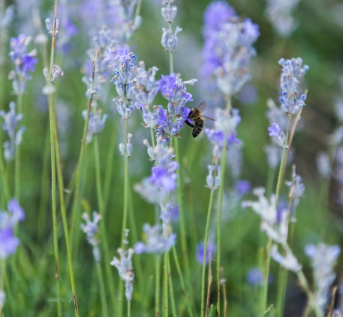 Floriterapia e Ambiente