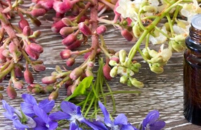 Floriterapia Energetica